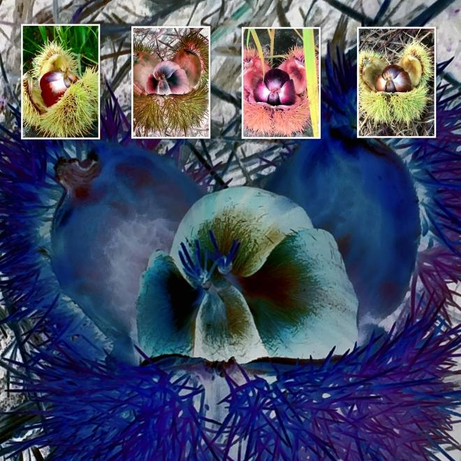 Collage Kastanienl-1