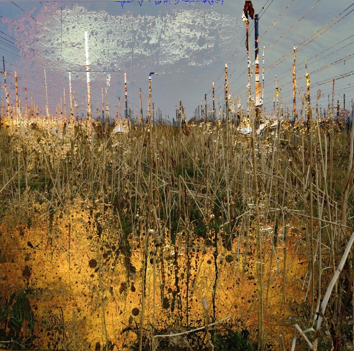 12-02 Mixed Media Blattgold Leinwand 40 x 40 cm-Reben_1-kleiner